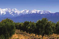 Mendoza, Argentina    Wine country!