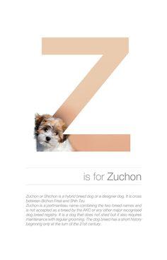 alphabetical-dog-breeds-zuchon