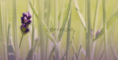 Poster, Plants, Photo Wallpaper, Canvas, Posters, Flora, Plant, Billboard, Planting