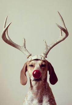 Don't forget to include your pooch in the family holiday photos this year :)