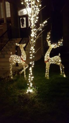 Outside Reindeers