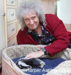 Queen Guitarist, Queen Brian May, Freddie Mercury, Cool Bands, Animated Gif, Pure Products, Cat Stuff, Bugs, Brain