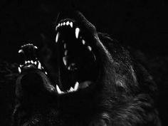 Image about black in aes; hades by Irene on We Heart It Olgierd Von Everec, Hades Aesthetic, Slytherin Aesthetic, Aesthetic Black, Hades And Persephone, She Wolf, Sirius Black, Greek Gods, The Villain