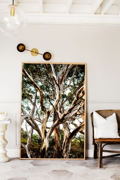 """Eucalyptus"" Limited Edition Photographic Print by Kara Rosenlund. Pictured in size Extra Large."