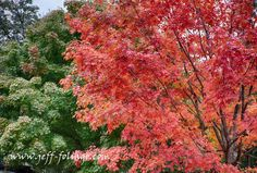 In search of peak fall foliage - New England fall foliage