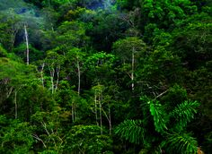 There are four very distinct layers of trees in a tropical rain forest…