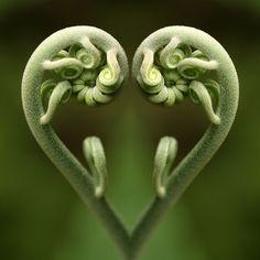 i <3 fibonacci