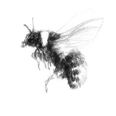 Bee Sketch, Sketch A Day, Fine Art Drawing, Art Drawings, Bumblebee Drawing, Shop Art, Surface Design, Uk Shop, How To Draw Hands