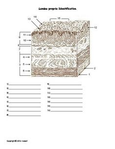 anatomy of the urinary system quiz worksheet quizes worksheets and the o 39 jays. Black Bedroom Furniture Sets. Home Design Ideas