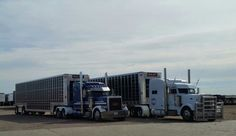 Peterbilt Trucker HJ, O'Brien & Buckshot Express Bull Haulers
