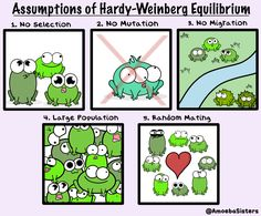5 assumptions of Hardy-Weinberg equilibrium, which states that the genetic variation in a population will remain constant from one generation to th. 5 Assumptions of Hardy-Weinberg Equilibrium Ap Biology, High School Biology, Biology Lessons, Science Biology, Middle School Science, Science Lessons, Science Education, Science Activities, Life Science