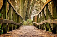 Wooden Bridge in fall photography background Photoshop background Bridge Photography digital background digital backdrop Tree Photography, Autumn Photography, Landscape Photography, Pranayama, Nature Images, Nature Photos, Pedestrian Bridge, Excursion, Digital Backdrops