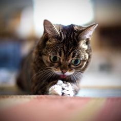 Lil Bub Today BUB realizes how amazing her paws really are.