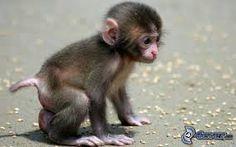 Resultado de imagen de mono