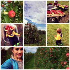 Wer selber Äpfel pflücken möchte hat hier ein wunderschönes Feld gefunden mit wunderbar herangereifen Äpfeln. Selber pflücken und herrliche Äpfel probieren!