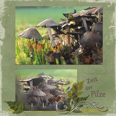 Lisas Fotowelt: Zeit der Pilze