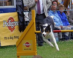 Dog Agility Jumps part of the competitions my dog and I compete in