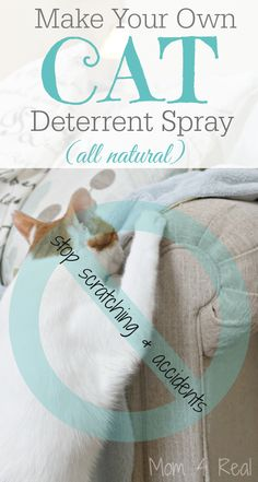 Make your own all natural cat deterrent spray to keep them from scratching your furniture or urinating in your home. via @Mom4Real