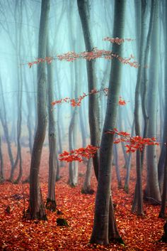 ~~Forest of Mist by Diana Oprean~~