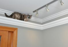 "Picture Rail / Crown Moulding Cat track.   ""we put crown molding (with a carpeted top) around the main rooms about 12"" from the ceiling. We ran 2 sets of picture ledges up the wall as steps, one in the family room and one in the living room, so that the cats could do circles if they wanted or ""escape"" if another cat was coming at them.""  Designed by: Design Moe Kitchen & Bath / Heather Moe designer"