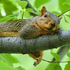De-stressing - this squirrel knows how to get it done