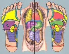 graphic colored image of body systems side by side with correlation to pressure point on bottom of feet