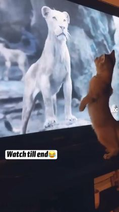 Funny Animal Jokes, Funny Cute Cats, Funny Animal Videos, Cute Funny Animals, Cute Little Kittens, Cute Little Animals, Cute Puppies, Cute Dogs, Funny Parrots