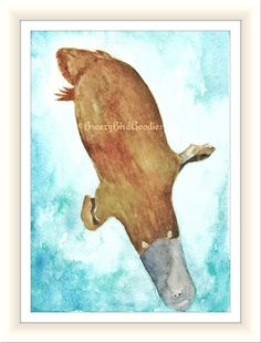 platypus print watercolor platypus australian platypus art for home australian animal illustration swimming platypus - Platypus Pictures To Print