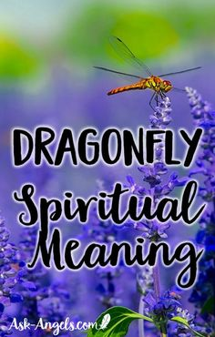 11 Dragonfly Meanings - Dragonfly Symbolism-Meaning of the Dragonfly - Ask-Angels.com