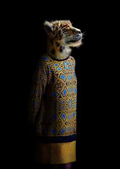 miguel vallinas adorns animals in apparel to reflect their human nature