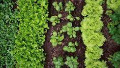 Survival Gardening Hacks | Bringing It Back To The Basics | https://survivallife.com/shade-loving-plants-for-gardens/