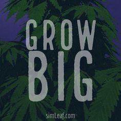 Grow Big!