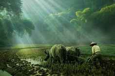 farm worker by budi 'ccline' on 500px