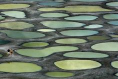 'The Spotted Lake' or 'Kliluk' located near the City of Osoyoos in British Columbia, Canada. The lake is full of minerals including; calcium, sodium & magnesium sulphate as well as metals like silver and titanium. In the summer time, most of the water in the lake evaporates, leaving behind over 365 pools.
