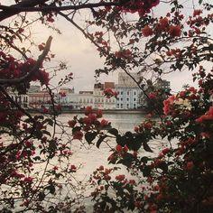 Recife - #flowers #instanature #recife #vsco #vscobrasil #vscobr by hallena_