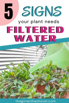 If your plant is showing any of these 5 sypmtoms, then it might just be time for you to switch out your water source. Check out these symptoms to make sure your plants are the healthiest they can be! How to Water Houseplants | How to Water Indoor Plants | House Plants | Indoor Plants | Plants Indoor, Air Plants, Apartment Plants, Water Sources, Plant Needs, Water Filter, Plant Care, Houseplants, Diy Design