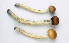 A hallucinogenic chemical found in magic mushrooms has successfully lifted severe depression in previously untreatable patients.