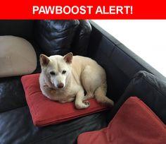 Please spread the word! Yoshi was last seen in Greeneville, TN 37743.    Nearest Address: 2277 Pisgah Road, Greeneville, TN, United States
