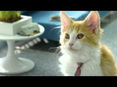 French speaking kitties commercial