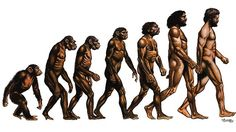 Evolution Of Man | ... of Evolution of Man from the ape. Picture: Supplied Source: Supplied