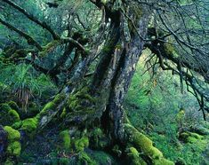 The world's 10 oldest living trees | MNN - Mother Nature Network | Bucket List of trees to visit