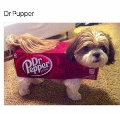 Dr pupper