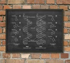 DNA and RNA Wall Art Poster - Biology Student Art Poster - Genetics Art Print - Dorm Decor - Student Gift Idea