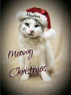 Mayhem Christmas