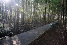 Mangrove Mangrove Forest, Railroad Tracks, Train Tracks