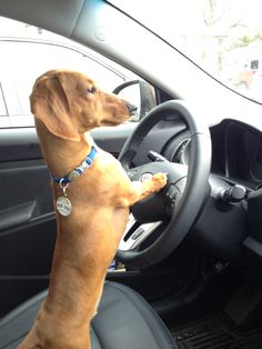 I got the wheel, you hit the pedals