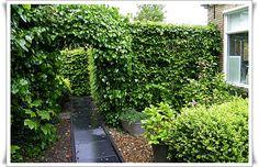 Tuin in mei 2014 na heerlijke frisse regenbui