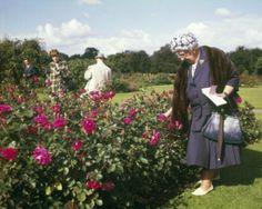 urban agatha christie gardening | rosarium westbroekpark, den haag 1964 | foto: nico naeff