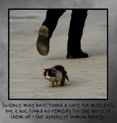 How people can just abuse or abandon animals is beyond me....thank god for all the volunteer animal rescuers out there!!
