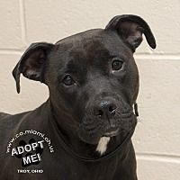 I am at a full, kill shelter in Troy, Ohio - Pit Bull Terrier. Meet Iris, a for adoption. https://www.adoptapet.com/pet/19548936-troy-ohio-pit-bull-terrier-mix